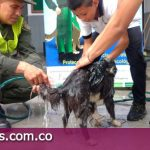 70 perros fueron aseados para mejorar su calidad de vida