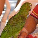 ¿Cómo Evitar Enfermedades Causadas por Animales Silvestres?