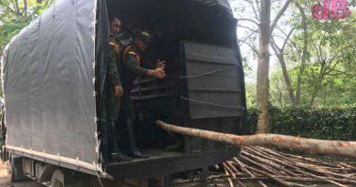 Incautación de 600 Varas de Madera por Parte de la Policía de Carabineros