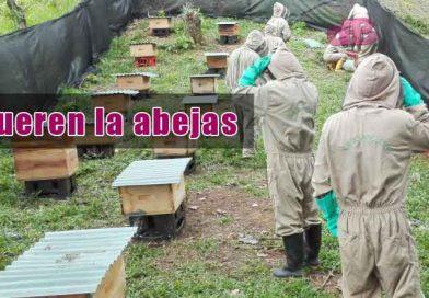 Muerte masiva de abejas en Puerto López