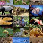Cuidado con las Enfermedades Contagiosas por Animales Silvestres