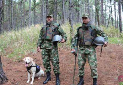 Equipo Canino del Ejercito Encuentra Minas Anti-Personas en Mesetas