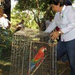 Los PNN y Corporinoquia al Cuidado de la Fauna Silvestre
