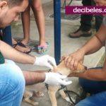 Más de 2.000 mascotas fueron inmunizadas contra la rabia