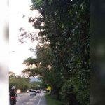 Un árbol de tres metros podría caer sobre una vía pública del Meta