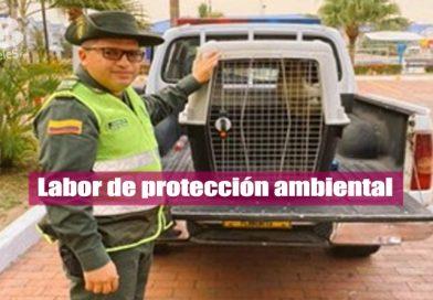 Policía logró rescatar a una tamandua en Villavicencio
