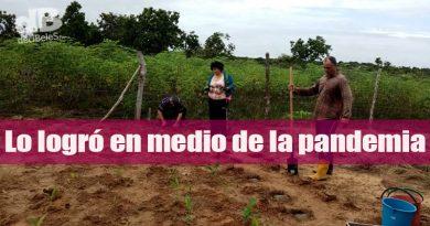 En su finca restituida de Puerto Gaitán, mujer cabeza de hogar emprende cultivo de cúrcuma
