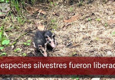 Liberan especies silvestres en el sector Kirpas de Villavicencio